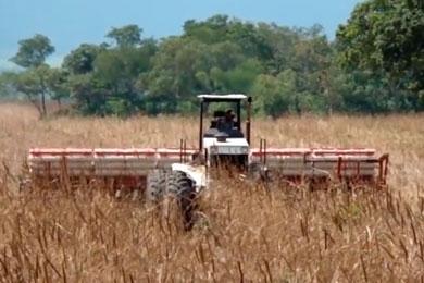 Muller TM 14 plantando soja stara 19 linhas